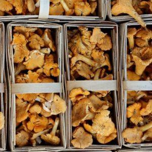 Трюфель и грибы